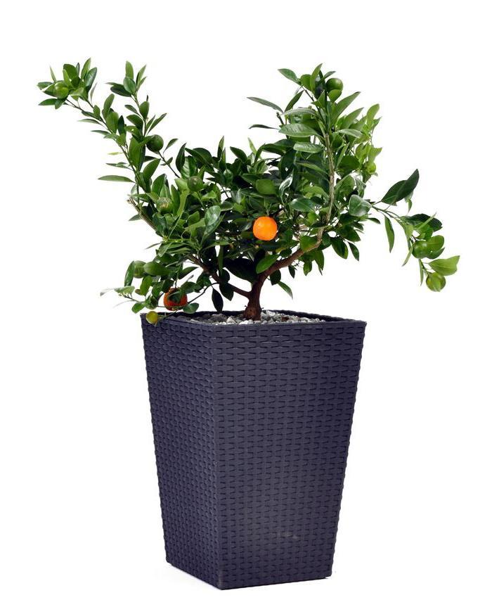 Пластиковое кашпо Rattan Planter S, 23.6 л, антрацит, 285х285х435 мм, Keter, Flowerpots, Израиль